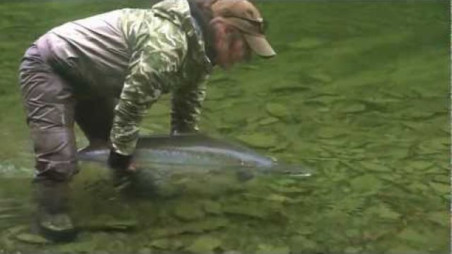 Gaspe Atlantic Salmon Fly fishing/Peche saumon Atlantique